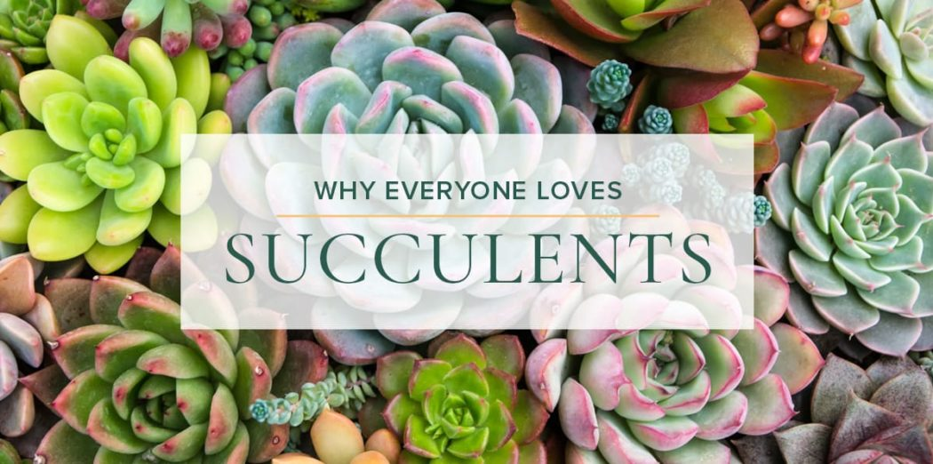 Elegant-Succulents-blog